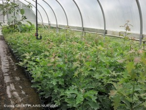 Tree Nursery Nebraska
