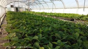 Seedlings in Nebraska