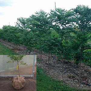Nebraksa tree farm