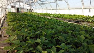 Nebraska tree nursery