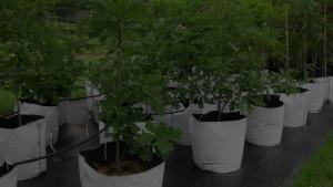 grow bag trees
