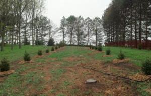 windbreak tree nebraska