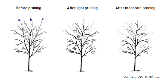 Pruning graphic
