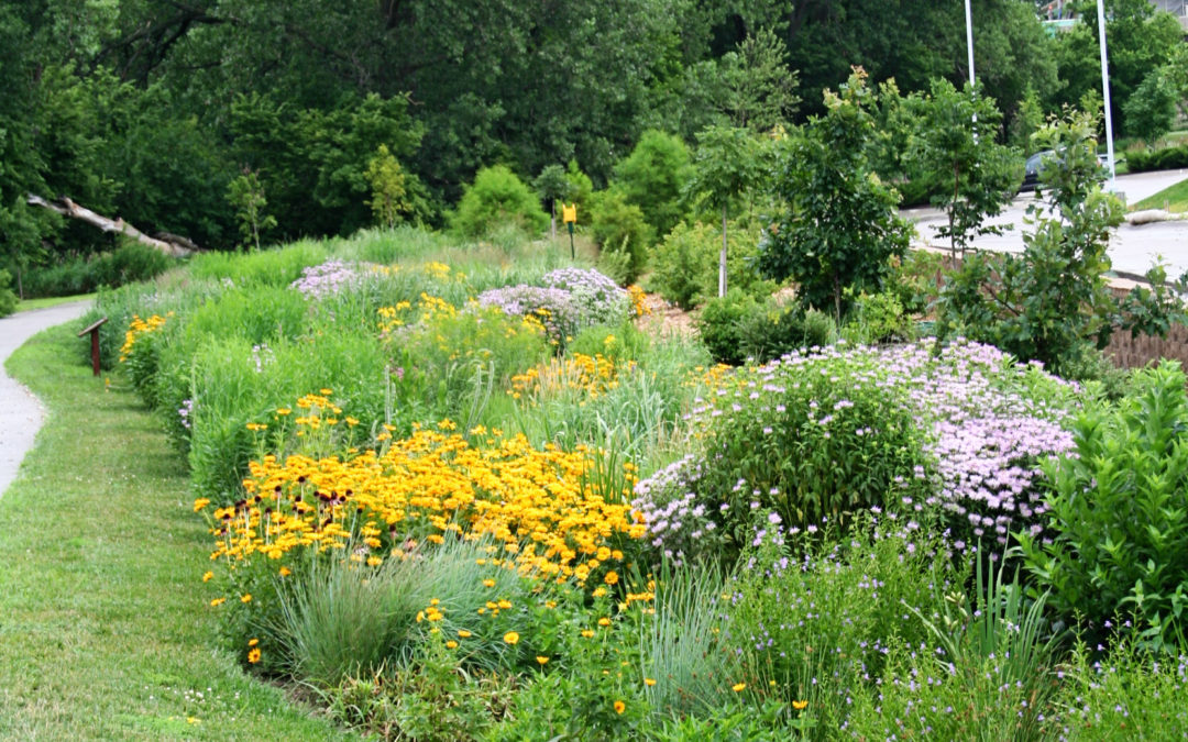 "Native Landscape Design: How to Achieve the ""Native"" Look"