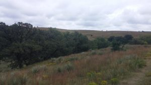 quercus macrocarpa relict burr oak canyon