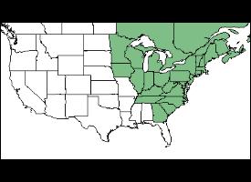 Yellow Birch territory