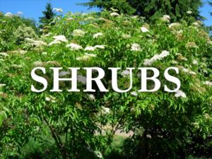nebraska shrubs