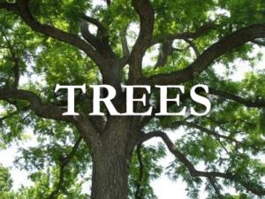 nebraska tree nursery