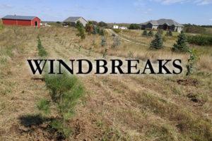 windbreaks trees