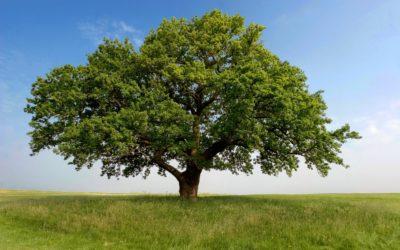 Nebraska Native Trees