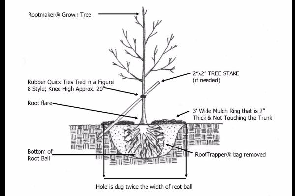Planting-Detail
