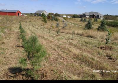 Windbreak Planting