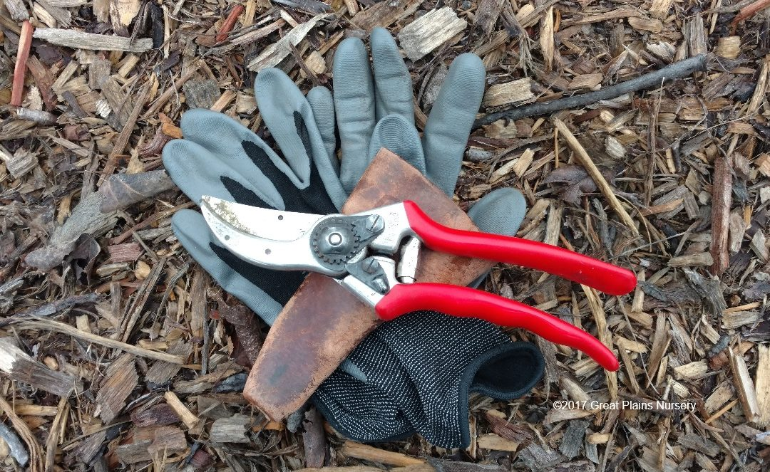 The Nitty Gritty About Pruning Young Trees