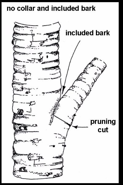 No-Collar-Included-Bark